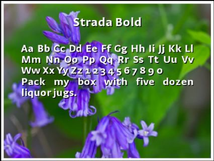 Strada Bold Font Preview