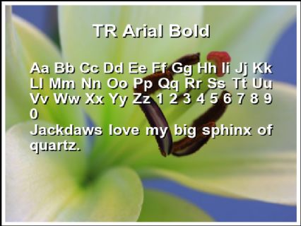 TR Arial Bold Font Preview